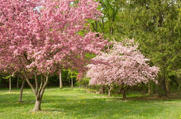 Spring 11_sml