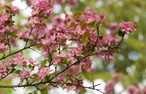 Spring 13_sml