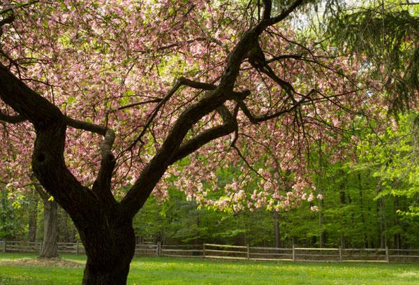 Spring 10_sml