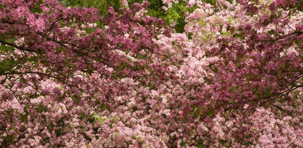 Spring 12_sml
