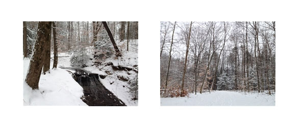 Winter Woods1
