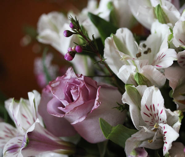 Spring_Rose_2014_sml