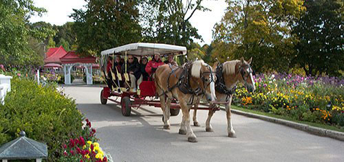 Mackinac-Horse-Buggy