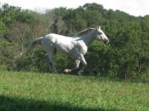 White-Horse-Cropped