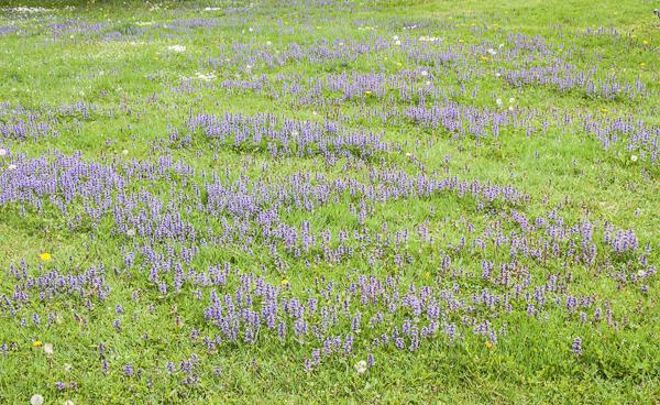 Purple Pretties_May_2016