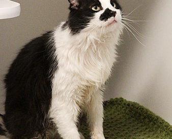 Gimme Shelter Cat Blankets
